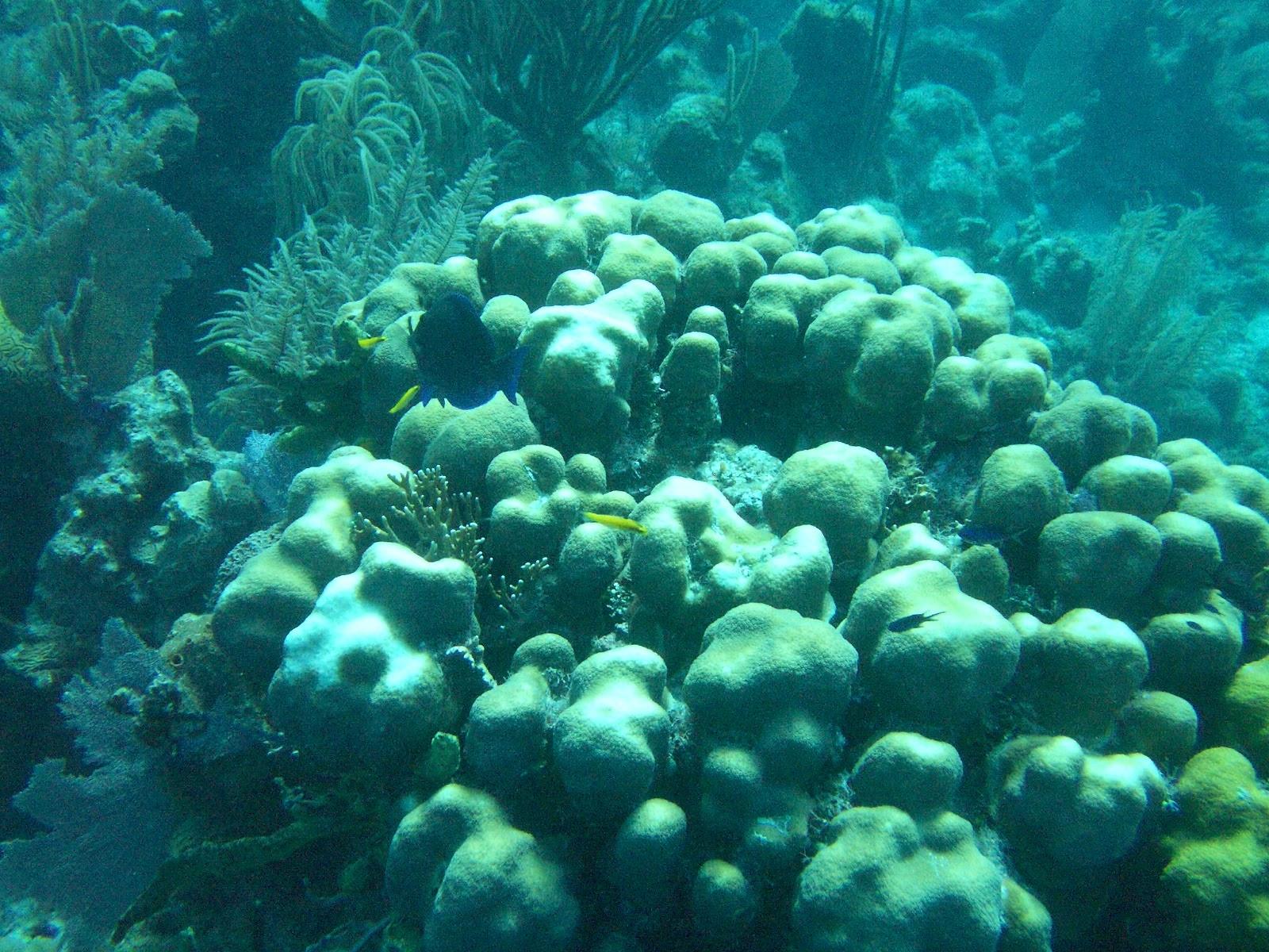 Scuba Diving Puerto_Rico