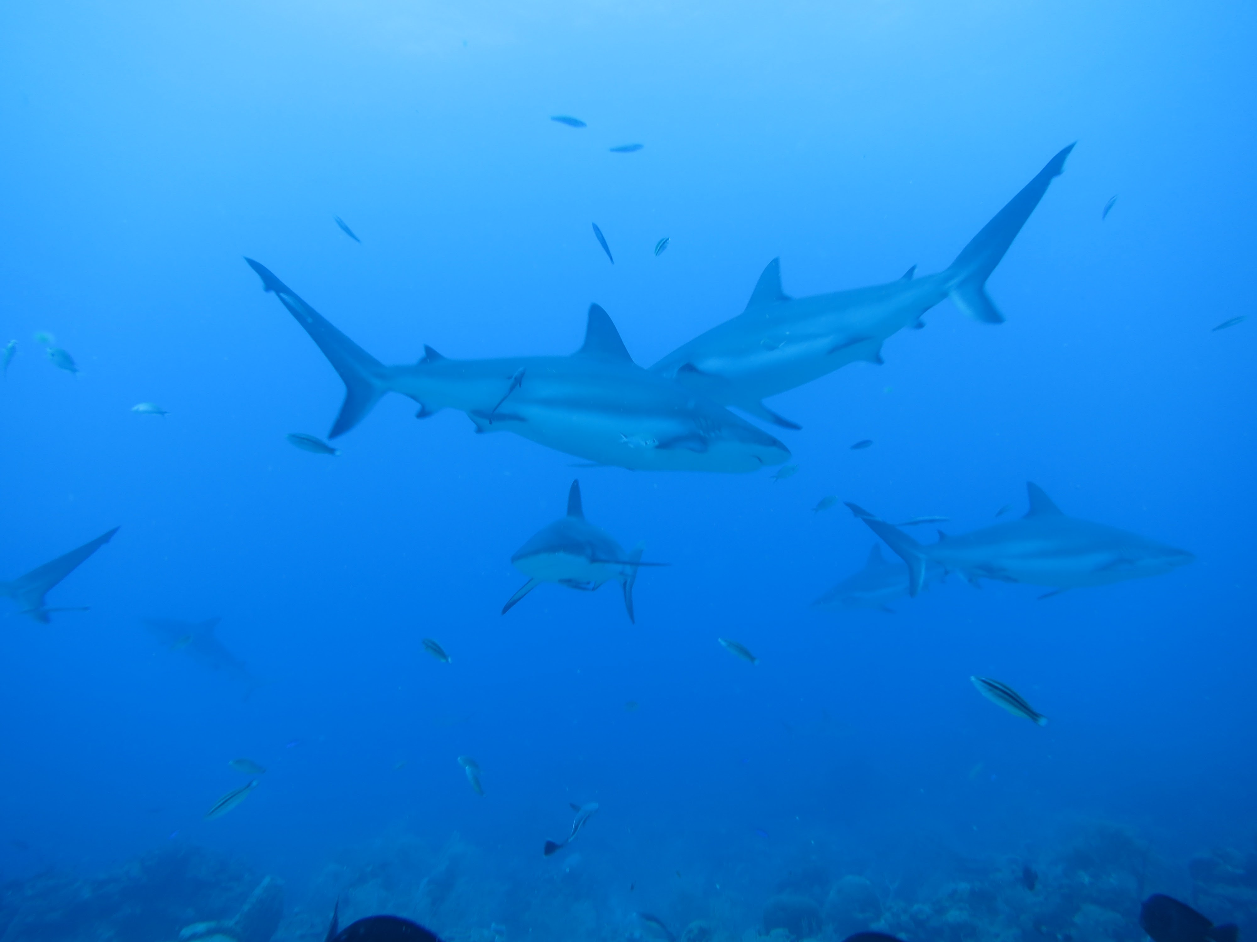 Scuba Diving Roatan, Honduras Island