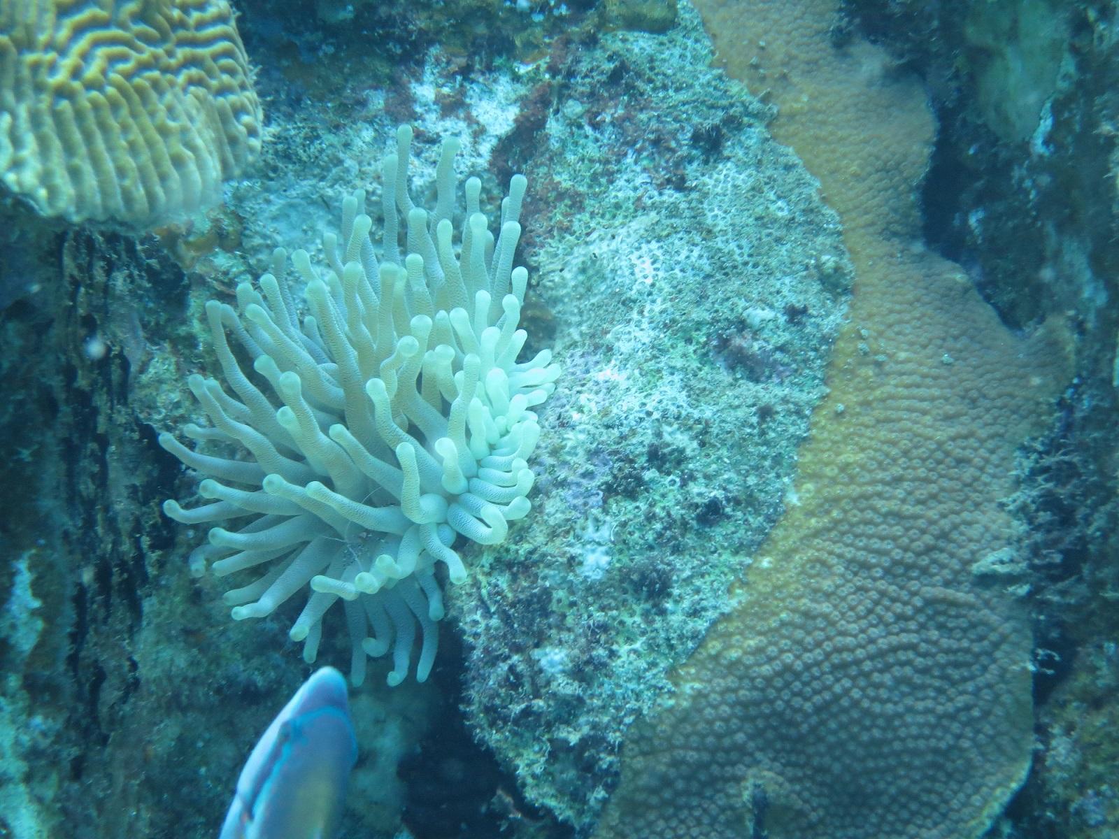Scuba Diving Bahamas Island