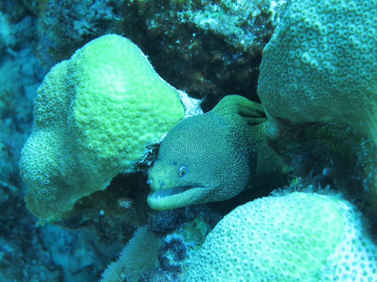 Scuba Diving Puerto Rico Island